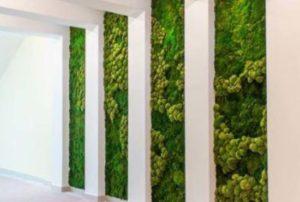 jardin-musgo-preservado